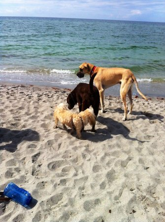 Brohard Paw Park: Dogs, dogs, dogs! Meeting & greeting at Brohard Paws Beach!