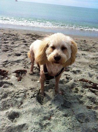 "Brohard Paw Park : ""I LOVE Brohard Paws Beach in Venice, FL!"" - Bruce 11/10/13"