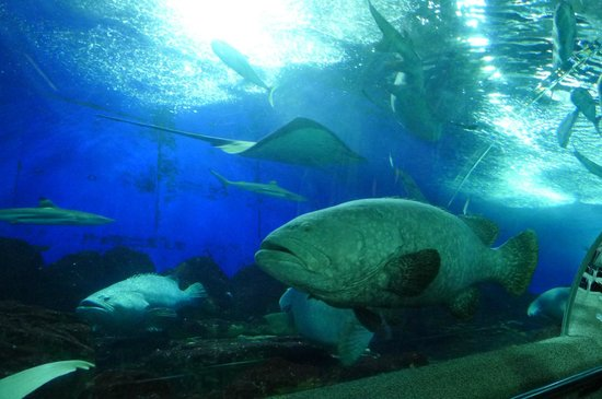 Underwater World and Dolphin Lagoon: Big Fishes