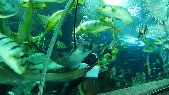 Underwater World and Dolphin Lagoon: Feeding time