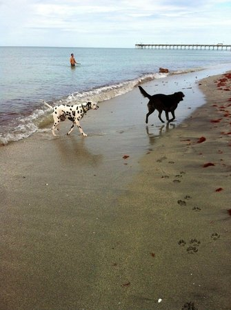 Brohard Paw Park: Brohard Paws Beach: it's the BEST!