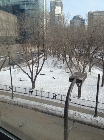 Hilton Garden Inn Minneapolis Downtown: Cute Dog Park View