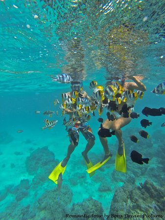 Bora Dream Pictures & Lagoon Tours : Perfect snorkeling
