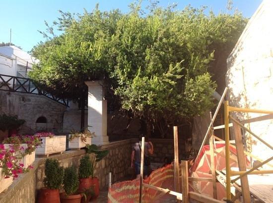 Moni Palianis: дерево желаний