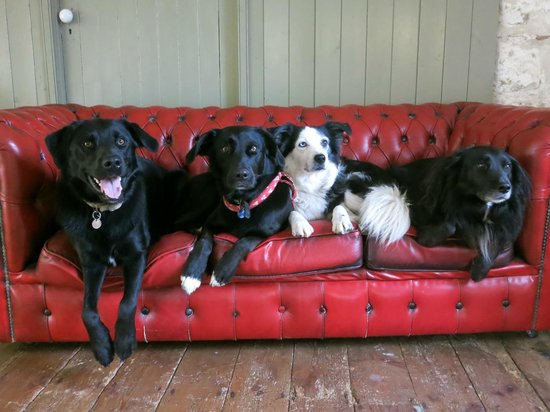 The Dog and Rabbit Cafe: The Sausage Police