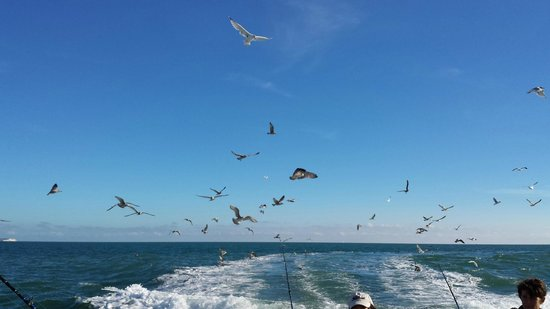Brighton Charter Fishing