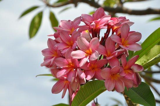Lake Argyle Resort & Caravan Park : Beautiful Flora at Lake Argyle Resort & Caravאוירה מצוינת , אוכל טעים מאד , שירות מצוין , המסעדה