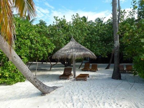 Filitheyo Island Resort : plage et transats privatifs devant les bungalows