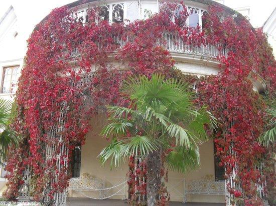 Cottage Palace in Peterhof: растения обрамляют здание