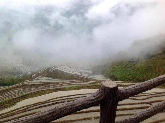 Dragon's Backbone Rice Terraces : arrozales con niebla y lluvia