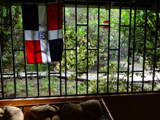 Vida Tropical B and B: View from kitchen into common courtyard where the bunnies are