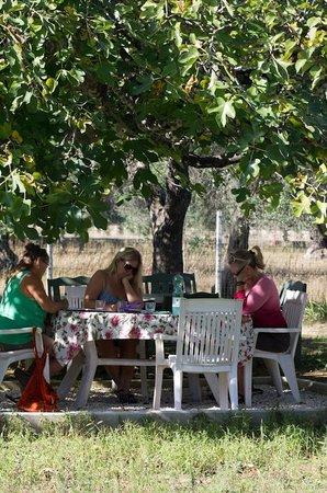 Villa Ottilia: Skugga under fikonträdet