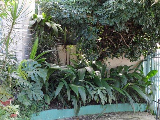 Vida Tropical B and B : Front courtyard