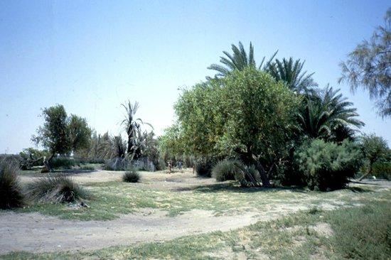 Qasr Azraq: oasi
