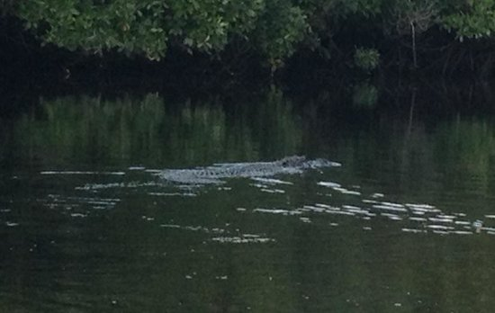 Backwater Adventure : Here gator, gator, gator