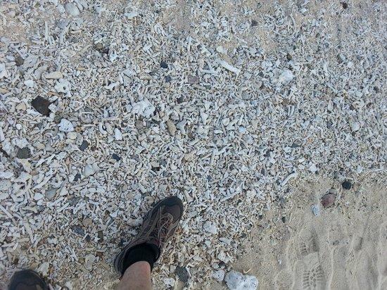 Yonehara Beach : Broken corals on the shore.