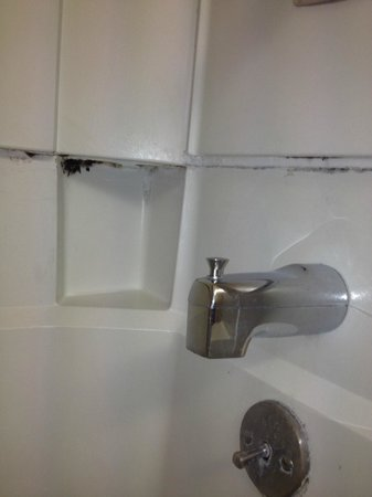 Millennium Hotel Durham: Black Mold in Shower
