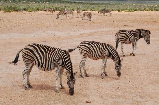 Intaba Lodge: Safari