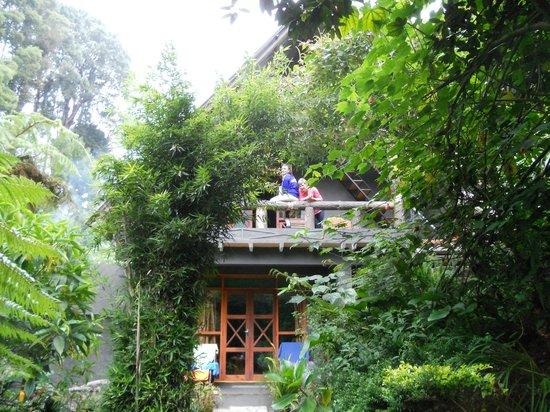 King Fern Cottage: vu sur une des chambres