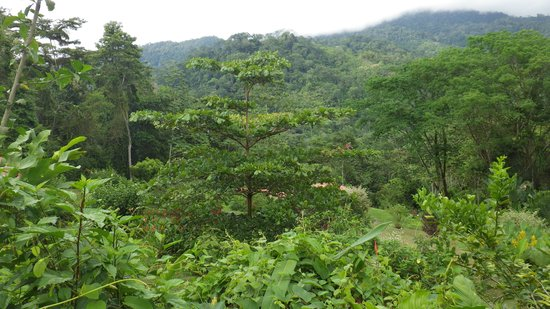 La Cacatua Lodge: uitzicht 2