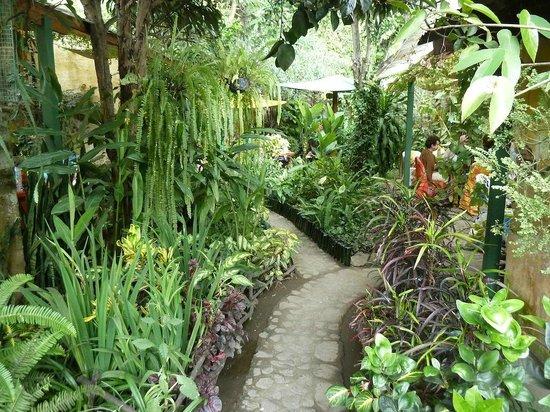 Sabe Rico: Well-kept gardens