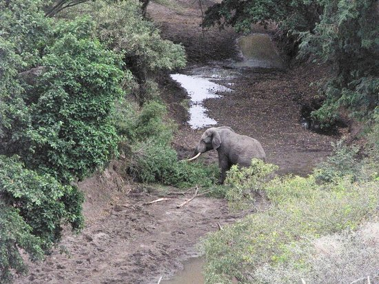 Manyara Ranch Conservancy : Morning Walk