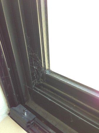 Staybridge Suites Stone Oak: Cobwebs between window panes