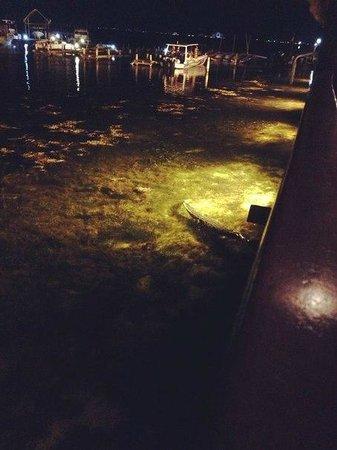 Captain's Cove: Кокодрил поужинать хочет)