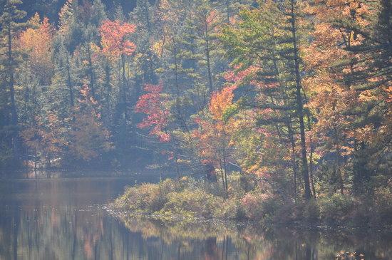 Pleasant Mountain Inn: View of Beaver Pond