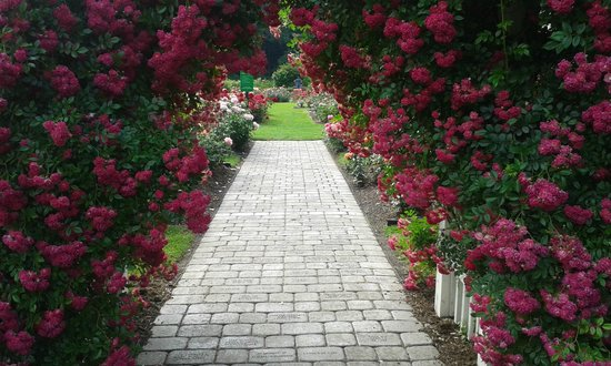 Central Park Rose Garden: One of many paths to Garden