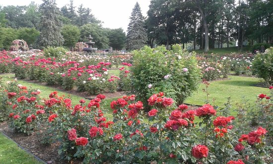 Central Park Rose Garden: View from Central Parkway 2