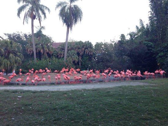 Busch Garden Picture Of Busch Gardens Tampa Tampa
