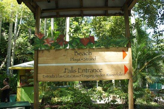 Dunn's River Falls and Park: Beach