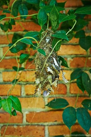 Home Stay Strand: Птичье гнездо