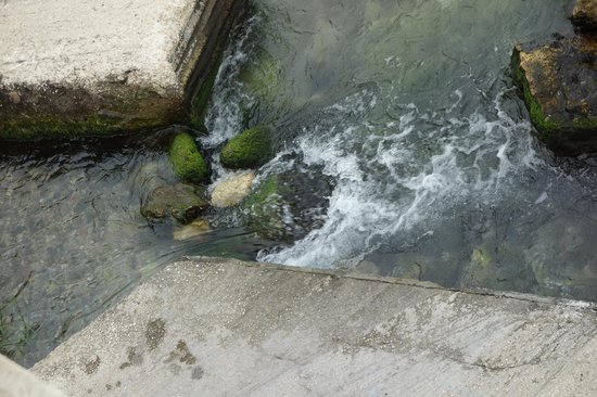 Fonte Aretusa : water still flow as in ancient Greek times