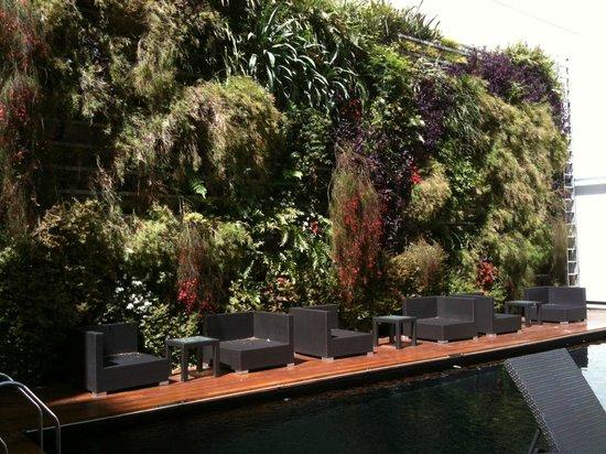 Novotel Buenos Aires: Jardim vertical junto à piscina