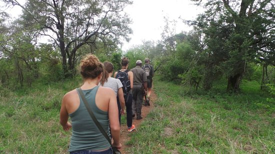Bushwise Safaris : walking safari during Bushwise stay