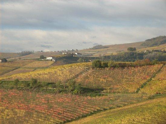 Red Wine Camere : Le vigne dal balcone