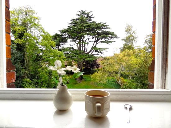 Ebury Hotel and Serviced Apartments : View from our Room ... and a cup of tea
