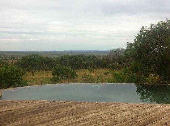 Serengeti Bushtops Camp: Piscina