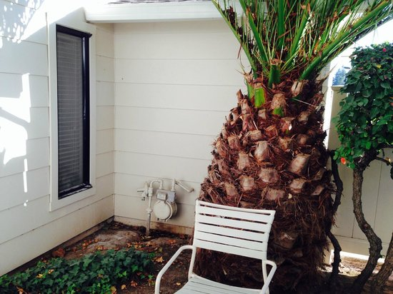 Silverado Resort and Spa : Small patio had a huge palm tree and window from another room overlooking it!