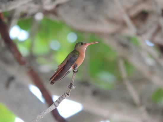 El Pescador Resort: Hummingbird Beauty of Belize