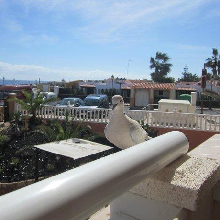 Ereza Dorado Suites Hotel : Our Balcony Friend