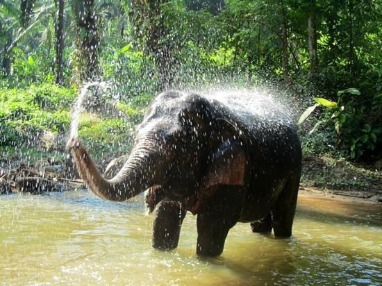Gillhams Fishing Resorts : elephant bathing
