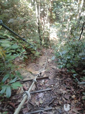 Mount Santubong: The jungle trek as you enter the waterfall ravine