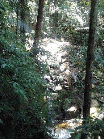 Mount Santubong: Jungle Pool