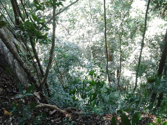 Mount Santubong: Granite cliff on edge of trail with tall trees from below