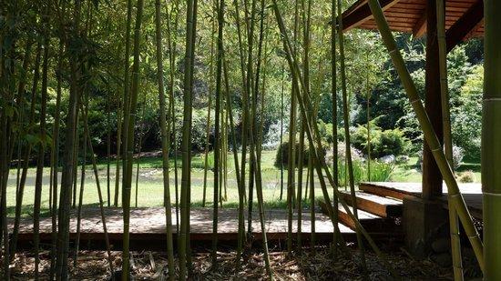 El Magnolio Bed and Breakfast: Garden view