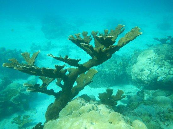 Avila Beach Hotel: coral just off the hotel beach