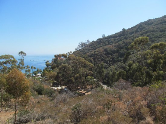 Catalina Zip Line Eco Tour: Another view from the hills.